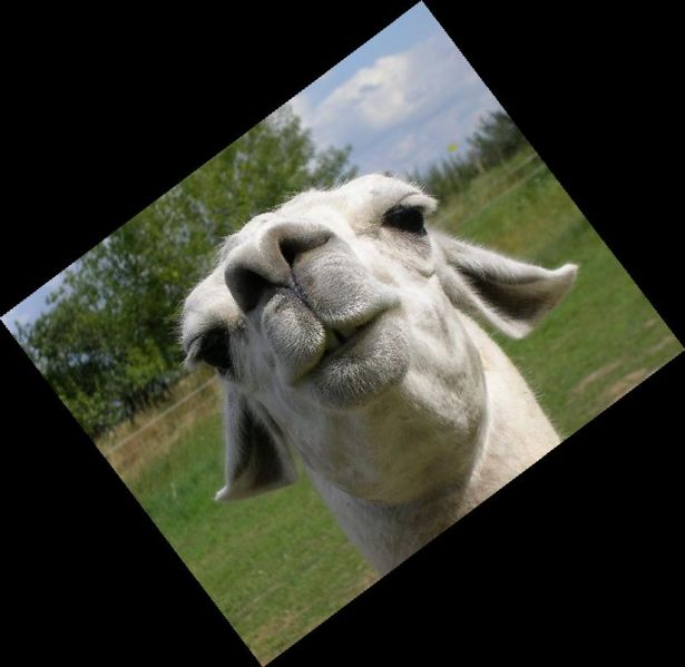 File:llama face rotated.jpg